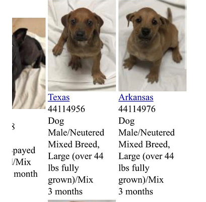 puppy listing on miami humane society